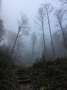 Uetlibergwald - die letzten Meter beim Aufstieg im Nebel, ganz oben dann über dem Nebelmeer